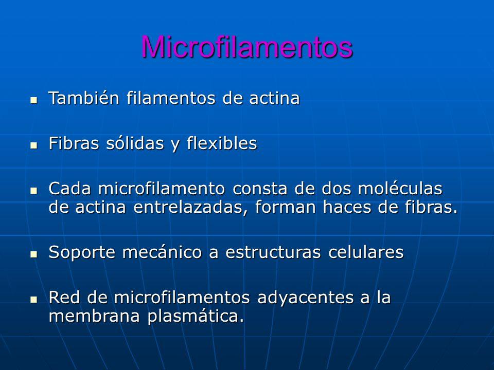 Microfilamentos También filamentos de actina También filamentos de actina Fibras sólidas y flexibles Fibras sólidas y flexibles Cada microfilamento co