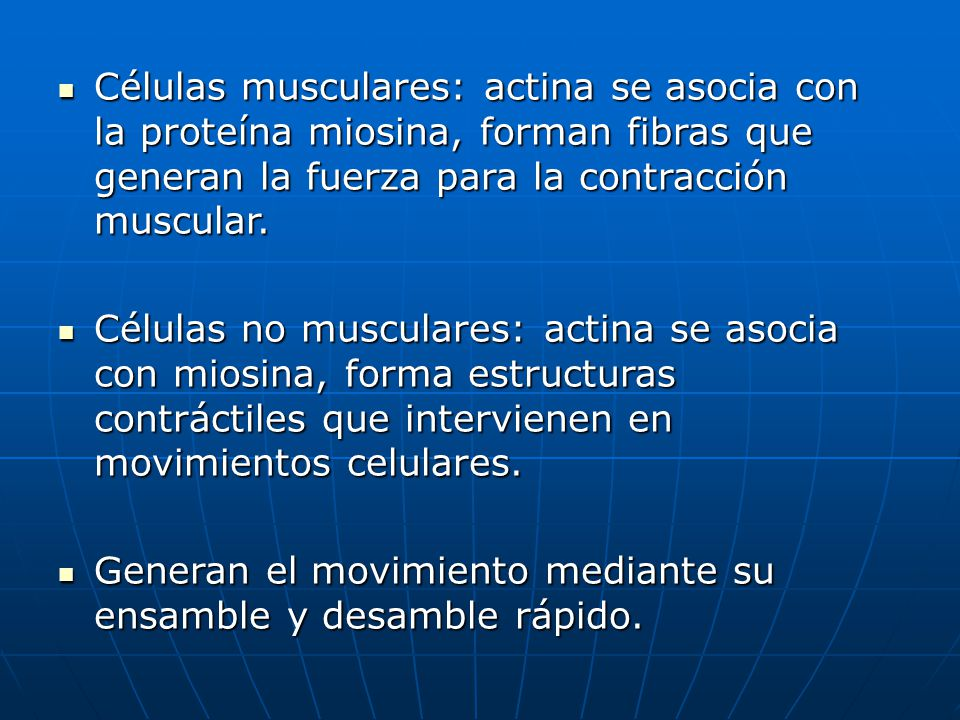 Células musculares: actina se asocia con la proteína miosina, forman fibras que generan la fuerza para la contracción muscular. Células musculares: ac