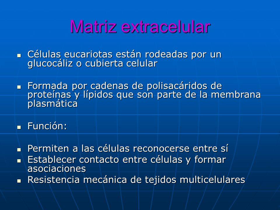 Matriz extracelular Células eucariotas están rodeadas por un glucocáliz o cubierta celular Células eucariotas están rodeadas por un glucocáliz o cubie