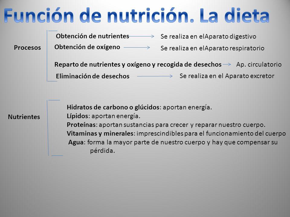 Procesos Obtención de nutrientes Se realiza en elAparato digestivo Obtención de oxígeno Reparto de nutrientes y oxígeno y recogida de desechos Ap. cir
