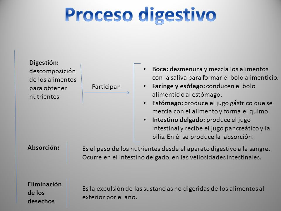 Digestión: descomposición de los alimentos para obtener nutrientes Participan Boca: desmenuza y mezcla los alimentos con la saliva para formar el bolo