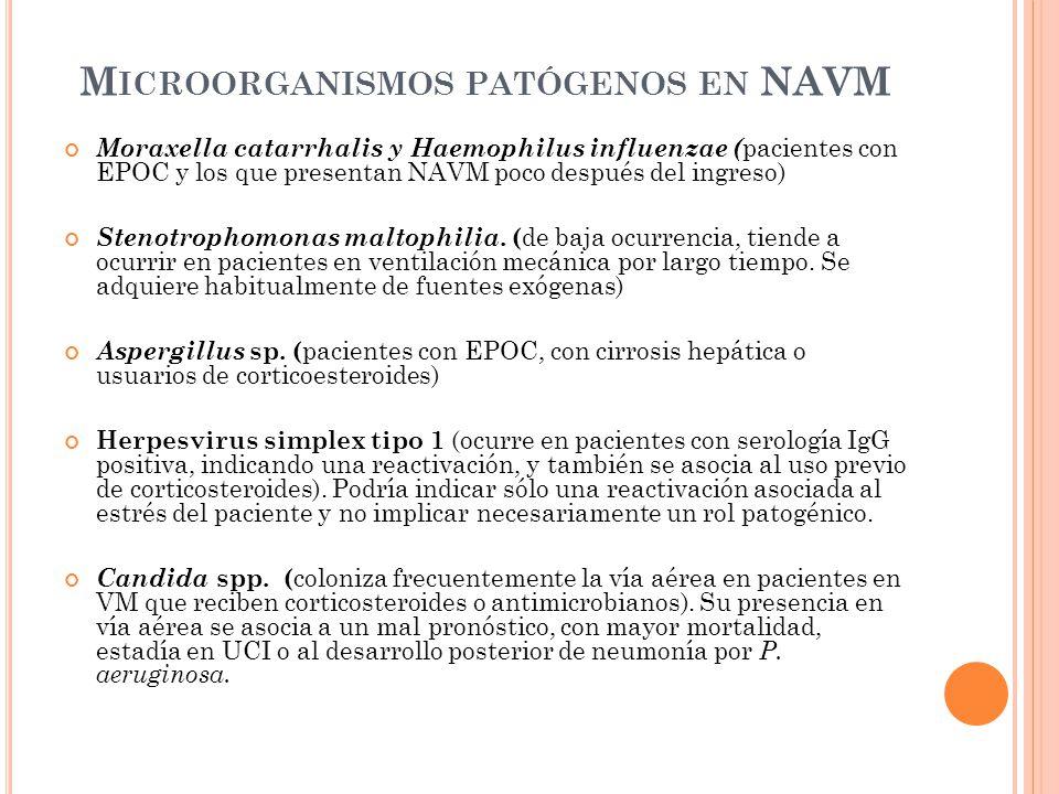 M ICROORGANISMOS PATÓGENOS EN NAVM Moraxella catarrhalis y Haemophilus influenzae ( pacientes con EPOC y los que presentan NAVM poco después del ingre