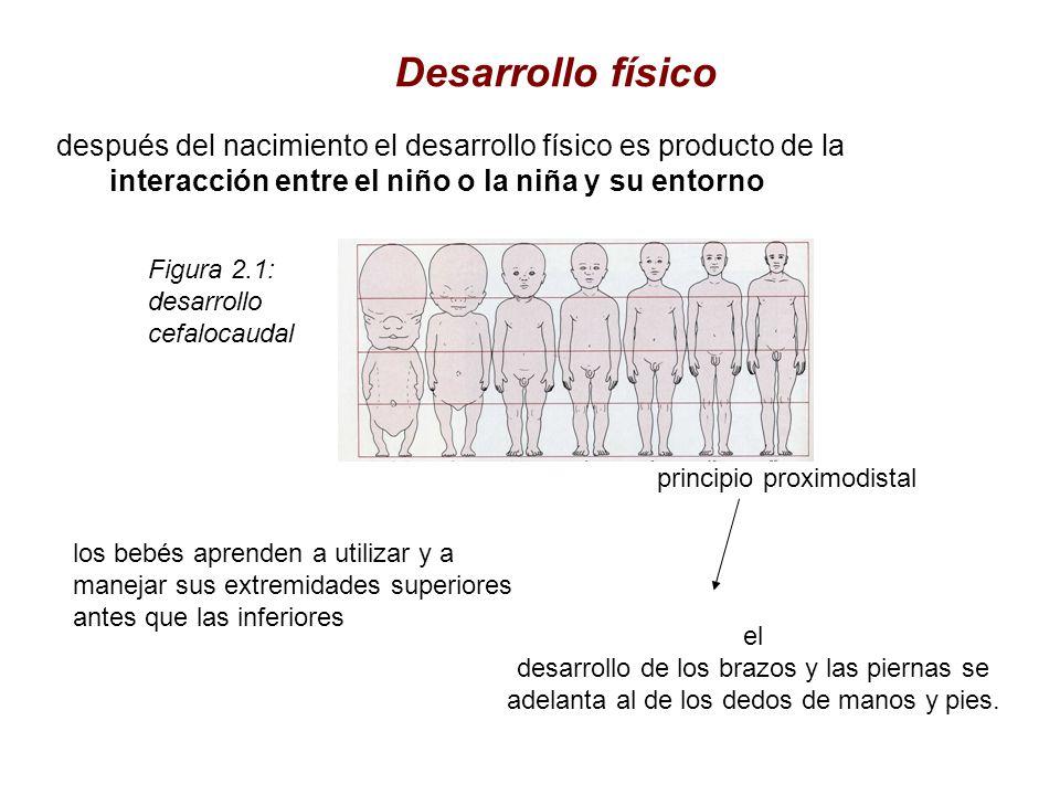 después del nacimiento el desarrollo físico es producto de la interacción entre el niño o la niña y su entorno Desarrollo físico Figura 2.1: desarroll