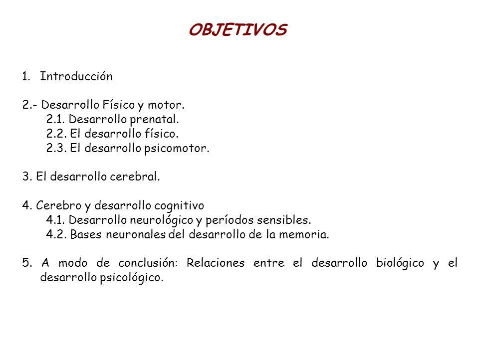 1.Introducción 2.- Desarrollo Físico y motor. 2.1. Desarrollo prenatal. 2.2. El desarrollo físico. 2.3. El desarrollo psicomotor. 3. El desarrollo cer