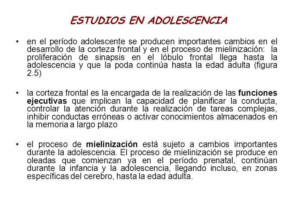 ESTUDIOS EN ADOLESCENCIA en el período adolescente se producen importantes cambios en el desarrollo de la corteza frontal y en el proceso de mieliniza