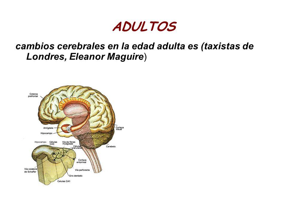 ADULTOS cambios cerebrales en la edad adulta es (taxistas de Londres, Eleanor Maguire)