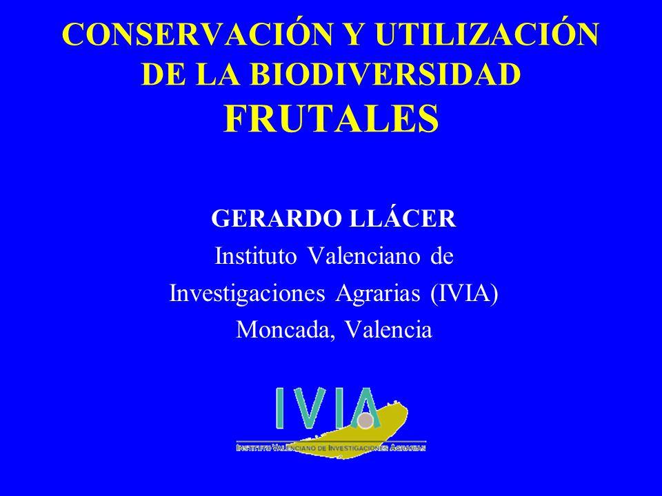 CONSERVACIÓN Y UTILIZACIÓN DE LA BIODIVERSIDAD FRUTALES GERARDO LLÁCER Instituto Valenciano de Investigaciones Agrarias (IVIA) Moncada, Valencia