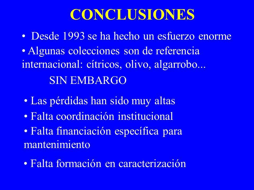 CONCLUSIONES Desde 1993 se ha hecho un esfuerzo enorme Algunas colecciones son de referencia internacional: cítricos, olivo, algarrobo... SIN EMBARGO