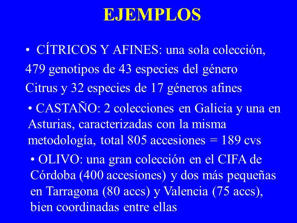 EJEMPLOS CÍTRICOS Y AFINES: una sola colección, 479 genotipos de 43 especies del género Citrus y 32 especies de 17 géneros afines CASTAÑO: 2 coleccion