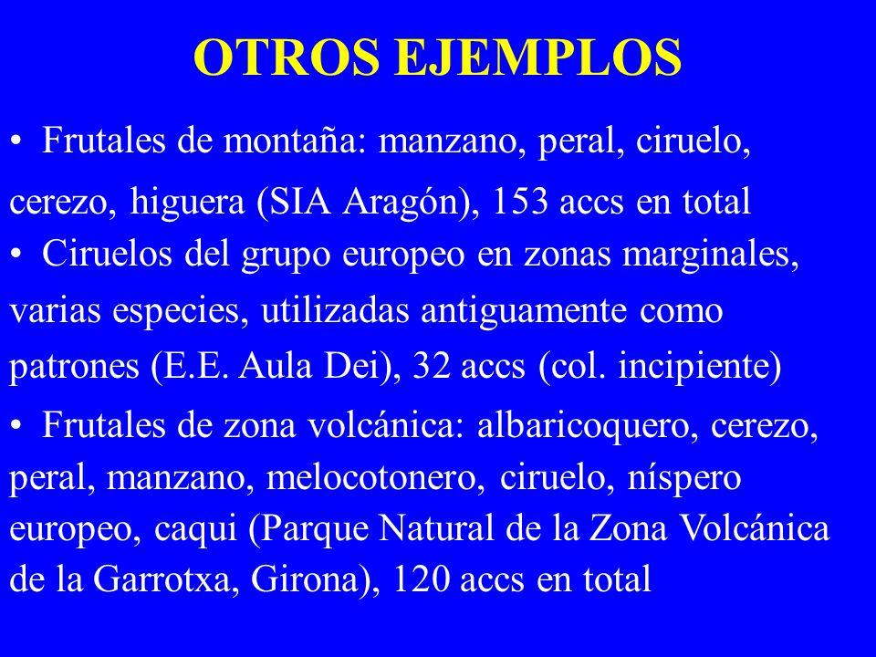 OTROS EJEMPLOS Frutales de montaña: manzano, peral, ciruelo, cerezo, higuera (SIA Aragón), 153 accs en total Ciruelos del grupo europeo en zonas margi