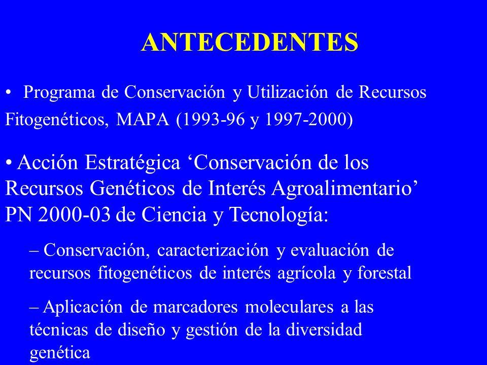 EJEMPLOS CÍTRICOS Y AFINES: una sola colección, 479 genotipos de 43 especies del género Citrus y 32 especies de 17 géneros afines CASTAÑO: 2 colecciones en Galicia y una en Asturias, caracterizadas con la misma metodología, total 805 accesiones = 189 cvs OLIVO: una gran colección en el CIFA de Córdoba (400 accesiones) y dos más pequeñas en Tarragona (80 accs) y Valencia (75 accs), bien coordinadas entre ellas