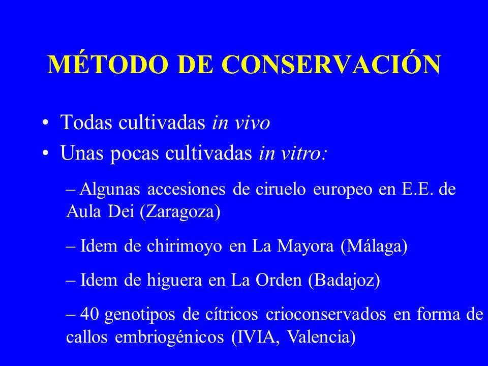 MÉTODO DE CONSERVACIÓN Todas cultivadas in vivo Unas pocas cultivadas in vitro: – Algunas accesiones de ciruelo europeo en E.E. de Aula Dei (Zaragoza)