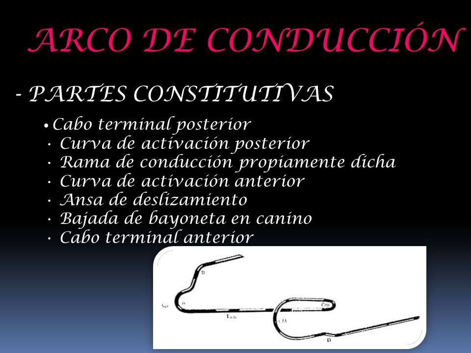 ARCO DE CONDUCCIÓN - PARTES CONSTITUTIVAS Cabo terminal posterior Curva de activación posterior Rama de conducción propiamente dicha Curva de activaci