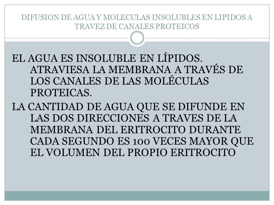 DIFUSION DE AGUA Y MOLECULAS INSOLUBLES EN LIPIDOS A TRAVEZ DE CANALES PROTEICOS EL AGUA ES INSOLUBLE EN LÍPIDOS. ATRAVIESA LA MEMBRANA A TRAVÉS DE LO