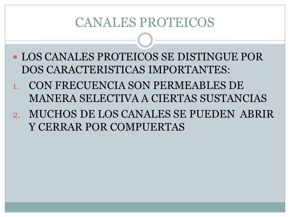 CANALES PROTEICOS LOS CANALES PROTEICOS SE DISTINGUE POR DOS CARACTERISTICAS IMPORTANTES: 1. CON FRECUENCIA SON PERMEABLES DE MANERA SELECTIVA A CIERT