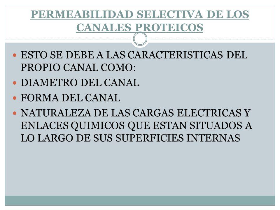 PERMEABILIDAD SELECTIVA DE LOS CANALES PROTEICOS ESTO SE DEBE A LAS CARACTERISTICAS DEL PROPIO CANAL COMO: DIAMETRO DEL CANAL FORMA DEL CANAL NATURALE