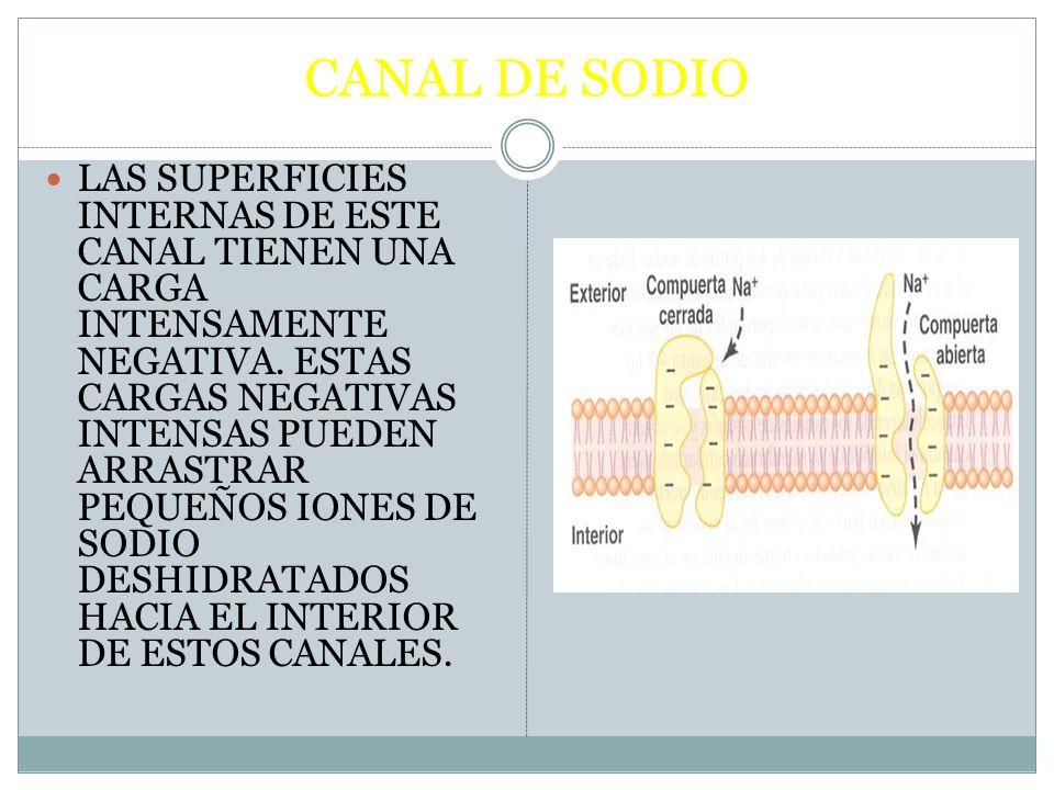 CANAL DE SODIO LAS SUPERFICIES INTERNAS DE ESTE CANAL TIENEN UNA CARGA INTENSAMENTE NEGATIVA. ESTAS CARGAS NEGATIVAS INTENSAS PUEDEN ARRASTRAR PEQUEÑO