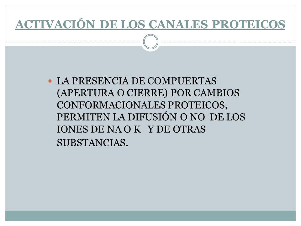 ACTIVACIÓN DE LOS CANALES PROTEICOS LA PRESENCIA DE COMPUERTAS (APERTURA O CIERRE) POR CAMBIOS CONFORMACIONALES PROTEICOS, PERMITEN LA DIFUSIÓN O NO D