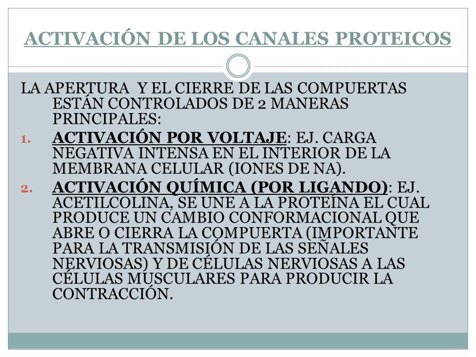 ACTIVACIÓN DE LOS CANALES PROTEICOS LA APERTURA Y EL CIERRE DE LAS COMPUERTAS ESTÁN CONTROLADOS DE 2 MANERAS PRINCIPALES: 1. ACTIVACIÓN POR VOLTAJE: E