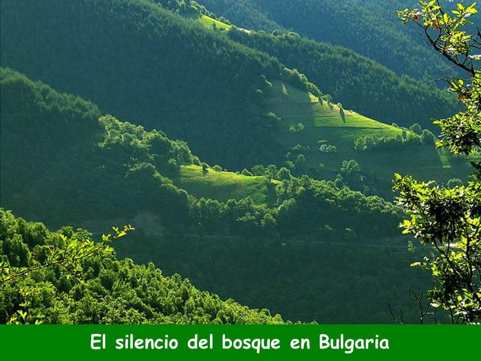 El silencio del bosque en Bulgaria