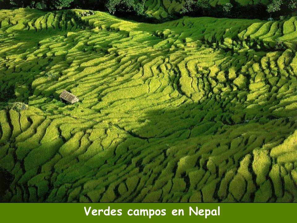 Verdes campos en Nepal