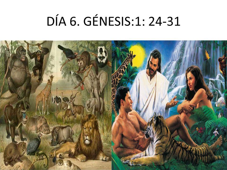 DÍA 6. GÉNESIS:1: 24-31