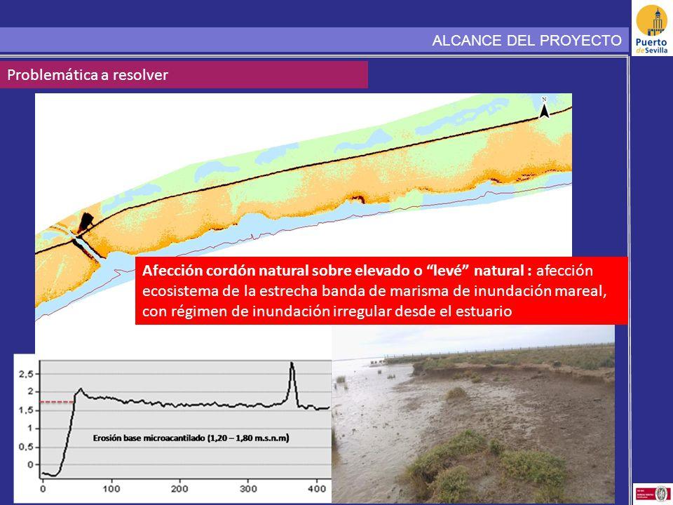ALCANCE DEL PROYECTO Problemática a resolver Afección cordón natural sobre elevado o levé natural : afección ecosistema de la estrecha banda de marisma de inundación mareal, con régimen de inundación irregular desde el estuario