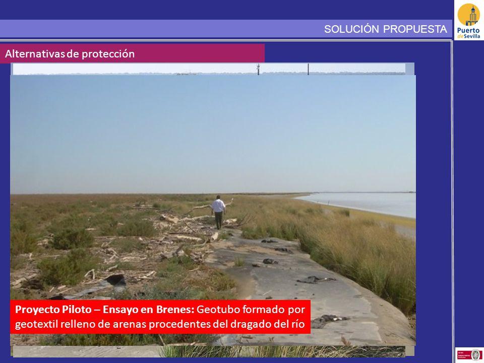 SOLUCIÓN PROPUESTA Alternativas de protección Proyecto Piloto – Ensayo en Brenes: Geotubo formado por geotextil relleno de arenas procedentes del dragado del río