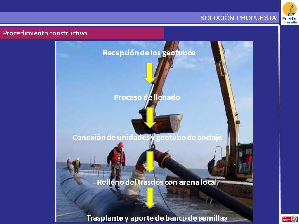 SOLUCIÓN PROPUESTA Procedimiento constructivo Recepción de los geotubos Proceso de llenado Conexión de unidades y geotubo de anclaje Relleno del trasdós con arena local Trasplante y aporte de banco de semillas