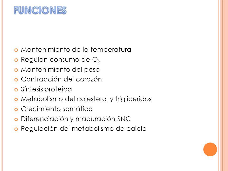 Mantenimiento de la temperatura Regulan consumo de O 2 Mantenimiento del peso Contracción del corazón Síntesis proteica Metabolismo del colesterol y t