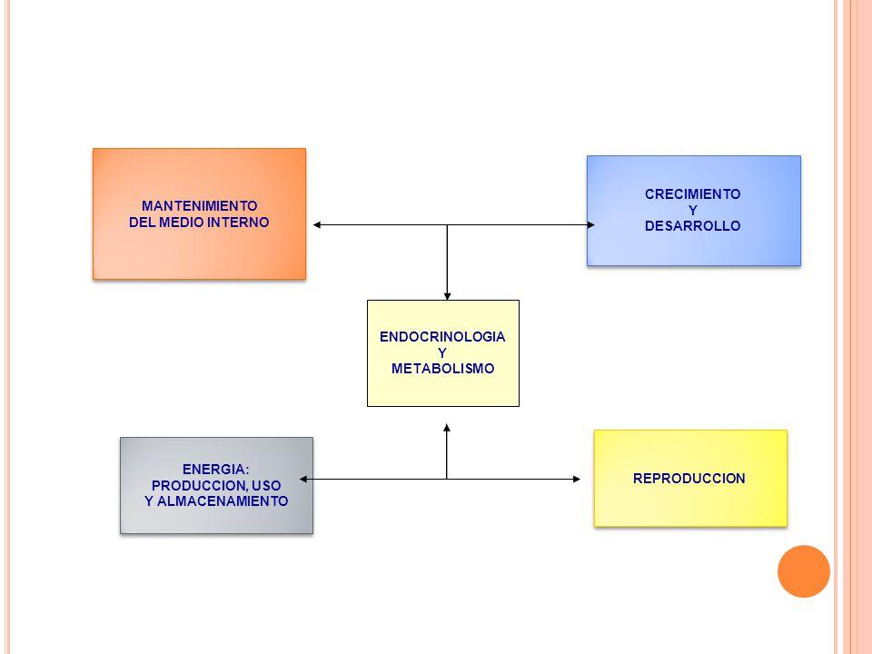 MANTENIMIENTO DEL MEDIO INTERNO MANTENIMIENTO DEL MEDIO INTERNO ENDOCRINOLOGIA Y METABOLISMO CRECIMIENTO Y DESARROLLO CRECIMIENTO Y DESARROLLO ENERGIA