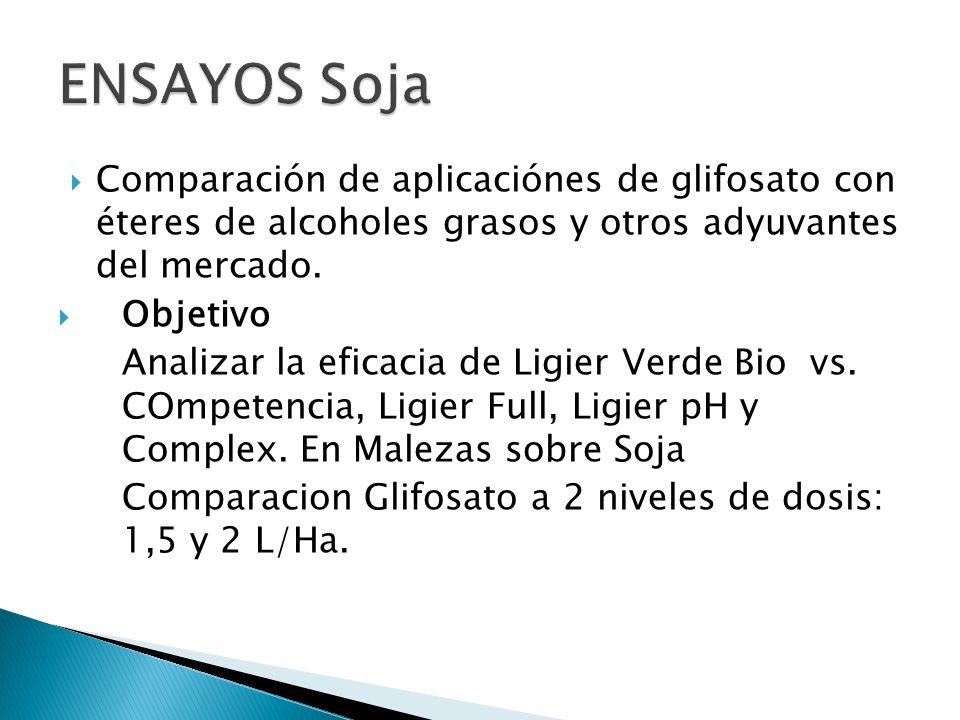 Comparación de aplicaciónes de glifosato con éteres de alcoholes grasos y otros adyuvantes del mercado. Objetivo Analizar la eficacia de Ligier Verde