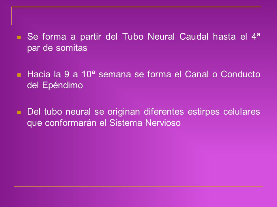 Se forma a partir del Tubo Neural Caudal hasta el 4ª par de somitas Hacia la 9 a 10ª semana se forma el Canal o Conducto del Epéndimo Del tubo neural