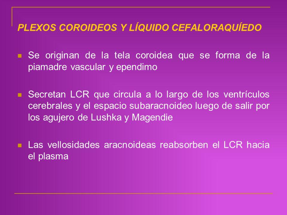 PLEXOS COROIDEOS Y LÍQUIDO CEFALORAQUÍEDO Se originan de la tela coroidea que se forma de la piamadre vascular y ependimo Secretan LCR que circula a l