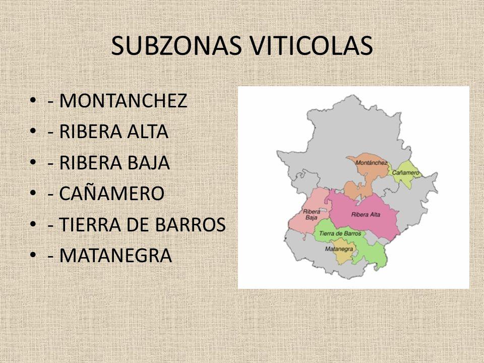 SUBZONAS VITICOLAS - MONTANCHEZ - RIBERA ALTA - RIBERA BAJA - CAÑAMERO - TIERRA DE BARROS - MATANEGRA