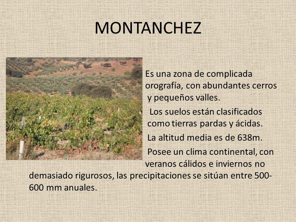 MONTANCHEZ Es una zona de complicada orografía, con abundantes cerros y pequeños valles. Los suelos están clasificados como tierras pardas y ácidas. L