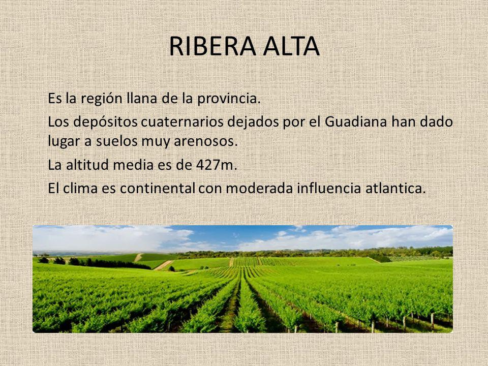 RIBERA ALTA Es la región llana de la provincia. Los depósitos cuaternarios dejados por el Guadiana han dado lugar a suelos muy arenosos. La altitud me