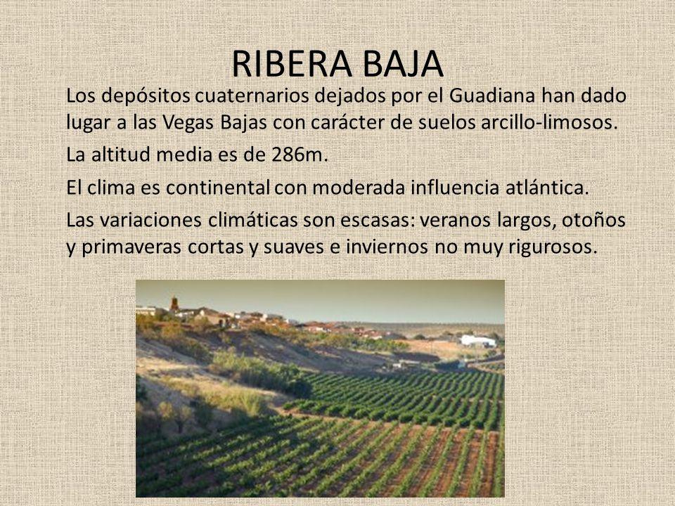 RIBERA BAJA Los depósitos cuaternarios dejados por el Guadiana han dado lugar a las Vegas Bajas con carácter de suelos arcillo-limosos. La altitud med