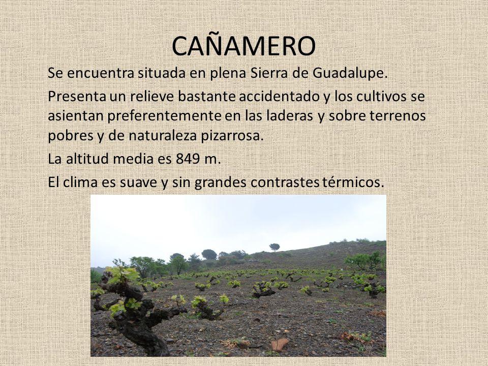 CAÑAMERO Se encuentra situada en plena Sierra de Guadalupe. Presenta un relieve bastante accidentado y los cultivos se asientan preferentemente en las