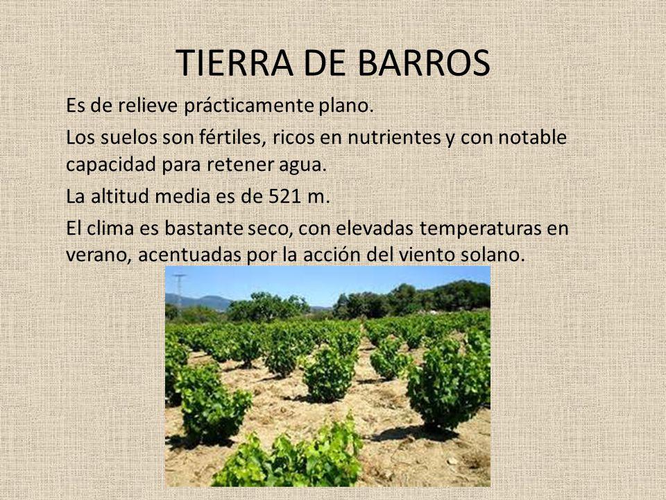 TIERRA DE BARROS Es de relieve prácticamente plano. Los suelos son fértiles, ricos en nutrientes y con notable capacidad para retener agua. La altitud