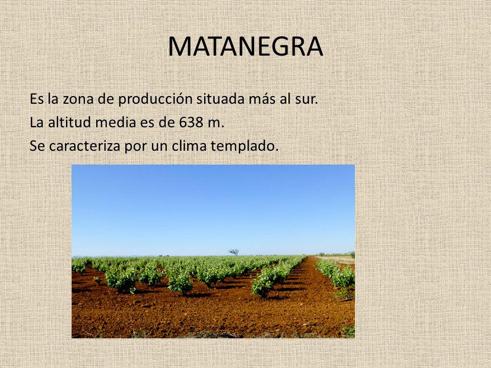 MATANEGRA Es la zona de producción situada más al sur. La altitud media es de 638 m. Se caracteriza por un clima templado.