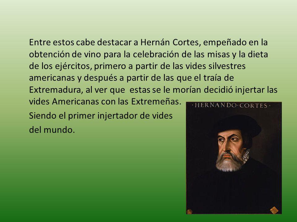 Entre estos cabe destacar a Hernán Cortes, empeñado en la obtención de vino para la celebración de las misas y la dieta de los ejércitos, primero a pa