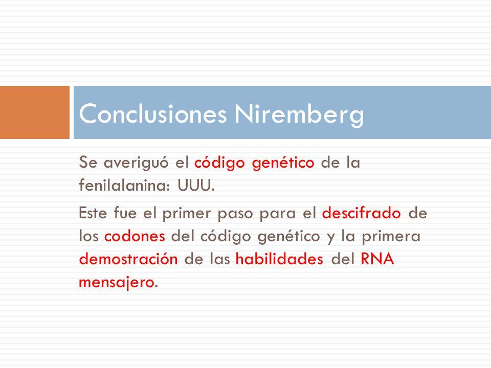 Se averiguó el código genético de la fenilalanina: UUU.