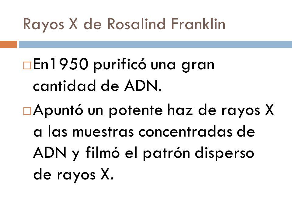 Rayos X de Rosalind Franklin En1950 purificó una gran cantidad de ADN.