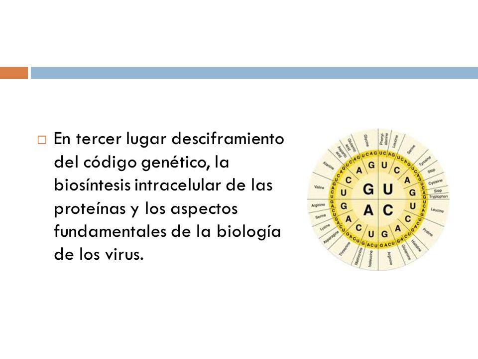 En tercer lugar desciframiento del código genético, la biosíntesis intracelular de las proteínas y los aspectos fundamentales de la biología de los virus.