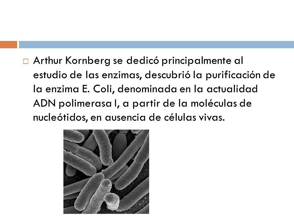 Arthur Kornberg se dedicó principalmente al estudio de las enzimas, descubrió la purificación de la enzima E.