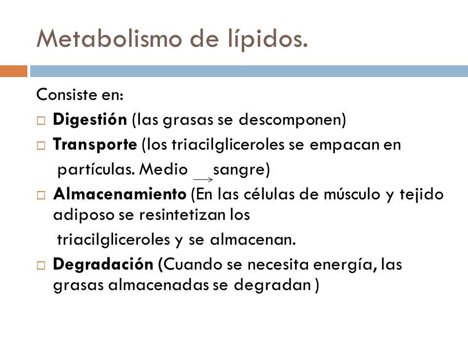 Metabolismo de lípidos.