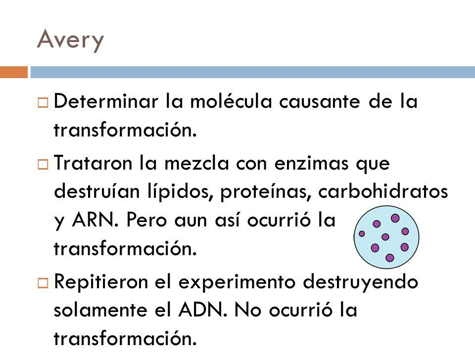 Avery Determinar la molécula causante de la transformación.