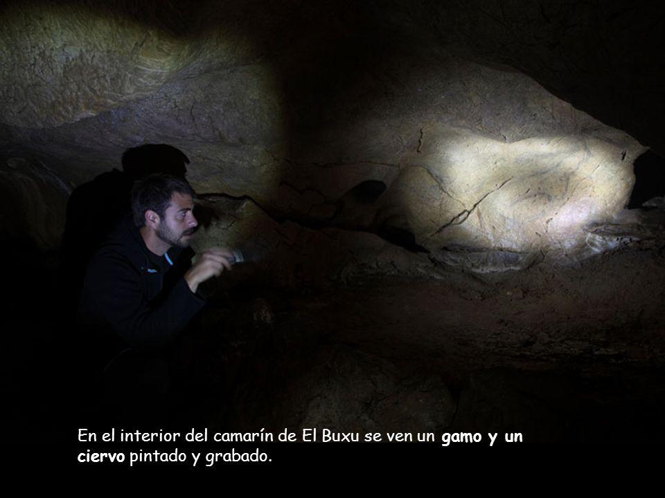 Cueva de El Buxu. En esta pequeña y estrecha galería encontramos grabados y pinturas de difícil visualización que, gracias a la ayuda de los guías, se