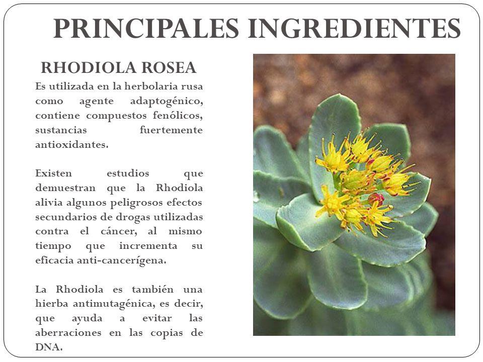 RHODIOLA ROSEA Es utilizada en la herbolaria rusa como agente adaptogénico, contiene compuestos fenólicos, sustancias fuertemente antioxidantes. Exist